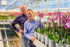 Sierteeltverpakkingen Van Iperen: blanco of bedrukte hoezen voor bloemen en planten van hoge kwaliteit