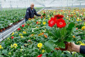 Sierteeltverpakkingen Van Iperen: kies ook voor een bloemenhoes of plantenhoes van hoge kwaliteit
