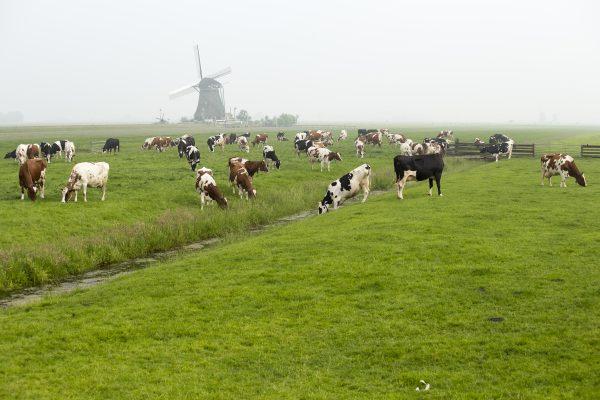 Bescherm uw gewas met onze gewasbeschermingsmiddelen. Realiseer veel en goed ruwvoer voor uw vee.