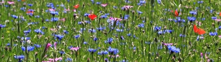Bloemzaad voor prachtige en kleurrijke bloemen | Van Iperen groenvoorziening